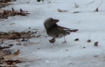 Hot Springs National Park Trails Dead Chief Junco Take Off