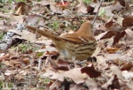 Hot Springs National Park Trails Pagoda Brown Thrasher