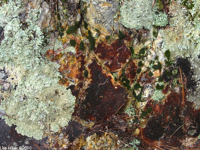 Hot Springs National Park Goat Rock Trail Lichen Rock Moss