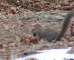 Hot Springs National Park Trails Short Cut Trail Squirrel