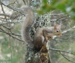 Hot Springs National Park Trails Tufa Terrace Squirrel