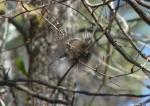 Hot Springs National Park Trails Carolina Chickadee In flight