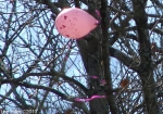 Hot Springs National Park Pink Helium Balloon 02/16/2010