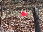Hot Springs National Parl HSMT Helium Balloon 02/17/2010