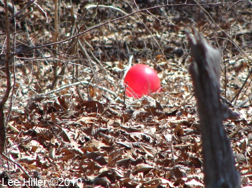 Hot Springs National Parl HSMT Helium Balloon 02/17/2010