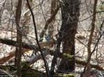Hot Springs National Park Trails HSMT Blue Jay