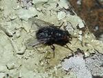 Hot Springs National Park Trails HSMT Big Fly