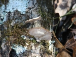 Hot Springs National Park Trails HSMT Fungus