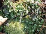 Hot Springs National Park Trails HSMT Moss Flowers