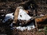 Hot Springs National Park Trails HSMT Snow Wood