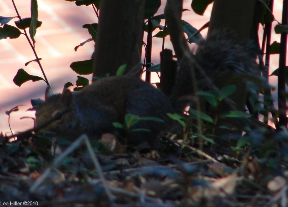 Hot Springs National Park Peak Trail Squirrel