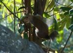 Hot Springs National Park Trails Tufa Terrace Squirrel