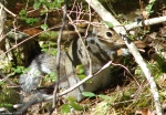 Hot Springs National Park HS Mt. Trail Squirrel