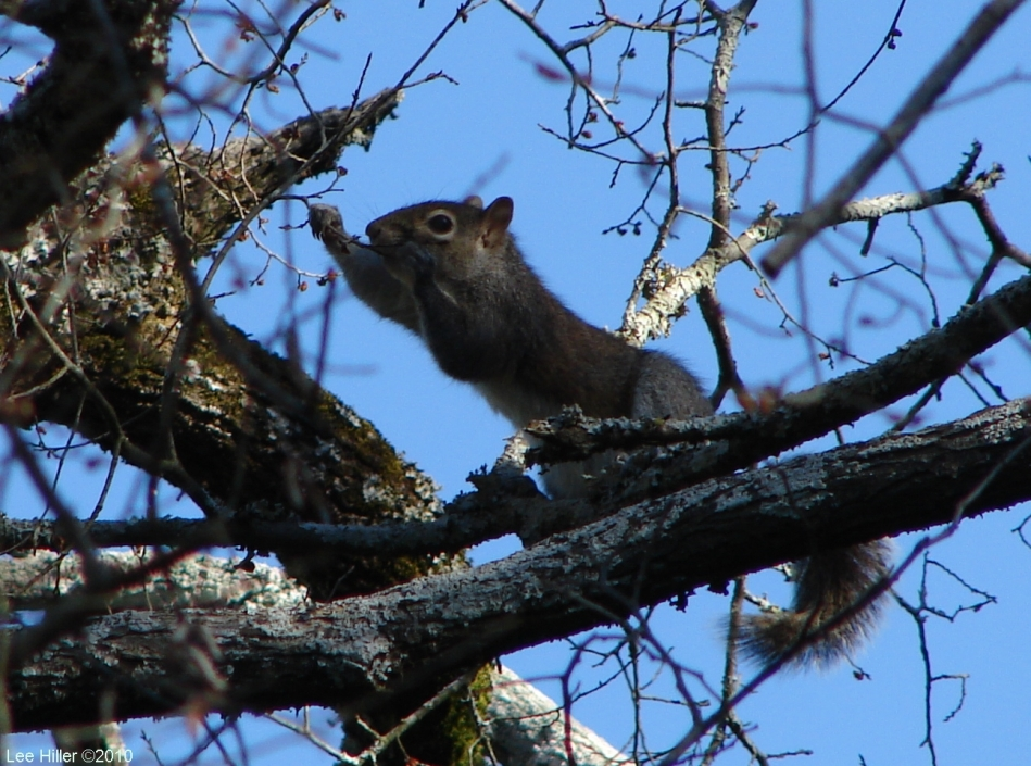 Hot Springs National Park Peak Trail Squirrel