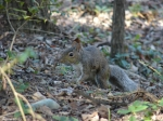 Hot Springs National Park Tufa Terrace Squirrel