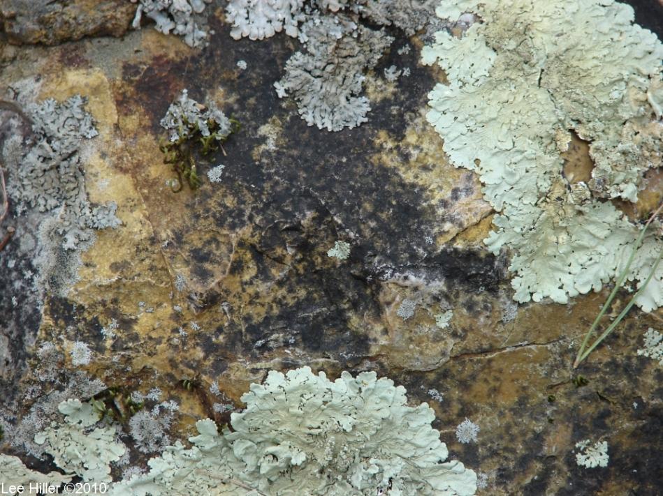 Hot Springs Mountain Trail Lichen Rock