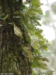 Hot Springs Mountain Trail Tree Ferns