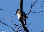Hot Springs National Park, AR Dead Chief Trail Blue Jay