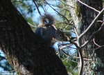 Hot Springs Mountain Trail Pagoda Squirrel