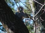 Hot Springs Mountain Trail Pagoda Squirrel