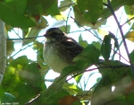 Hot Springs National Park, AR Peak Trail Sparrow