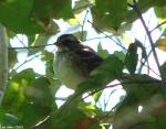 Hot Springs National Park, AR Peak Trail Sparrow