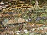 Short Cut Trail Layers Moss Rock Lichen