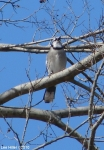 Hot Springs Mountain Trail Pagoda Blue Jays
