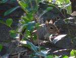 Hot Springs National Park, AR Tufa Terrace Squirrel