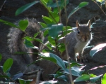 Hot Springs National Park, AR Tufa Terrace Squirrel