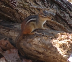 Hot Springs Mountain Trail East Chipmunk No. 1