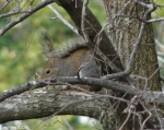 Hot Springs National Park, AR Entrance Squirrel
