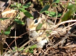 Hot Springs National Park Short Cut Trail Blond Chipmunk
