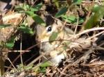 Hot Springs National Park Short Cut Trail Blond Chipmunk