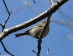 Hot Springs National Park Uppe rDogwood Mystery bird
