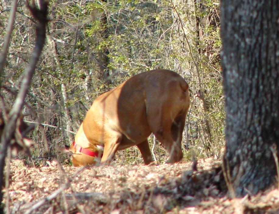 Mar 06 2010 Short Cut Trail Large Boxer Off Leash