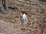 March 07 2010 Lower Dogwood Terrier Off Leash