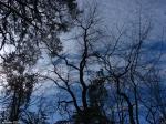 Hot Springs National Park Blue Sky Black Trees