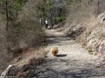 Goat Rock Trail Dog Off Leash