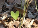 Dead Chief Trail Heart Leaf