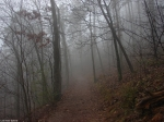 Hot Springs National Park Hot Springs Mountain Traill Fog