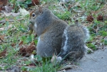 Hot Springs Mountain Road Squirrel