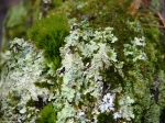 Hot Springs National Park Floral Trail Lichen Moss