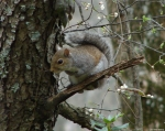 Hot Springs National Park, AR Peak Trail Squirrels