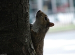 03282010FountainStreetSquirrel