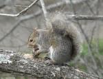 03282010PromenadeSquirrel