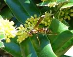 Hot Springs National Park, Arkansas Promenade Wasp