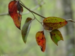 Hot Springs National Park Peak Trail Colorful Leaves