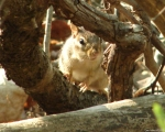 Hot Springs National Park Lower Dogwood Chipmunk