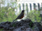 Hot Springs National Park, Arkansas Tufa Rock Robin